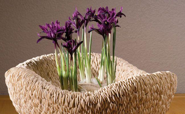 Producten mk floraldesign - Object design eigentijds ontwerp ...